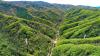 Fig. 1. Les trois tours facilitant les études sur l'écologie et la gestion de la forêt sur le bassin versant de la forêt de Qingyuan CERN (China Ecology Research Network, Chinese Academy of Sciences) sont situées dans trois sites forestiers classés comme forêt naturelle mixte à feuilles caduques (la tour la plus proche à gauche), forêt naturelle de chênes de Mongolie (la tour droite), et forêt plantée en mélèze (la tour la plus lointaine). Les trois forêts représentent les trois principaux types d'écosystèmes forestiers secondaires du nord-est de la Chine.
