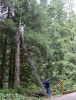 Mounting the antenna on a topped cedar