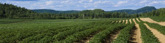 agriculture & plants