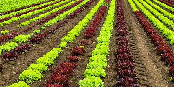 Agriculture & Plantes Instruments de mesure pour l'agriculture et la recherche