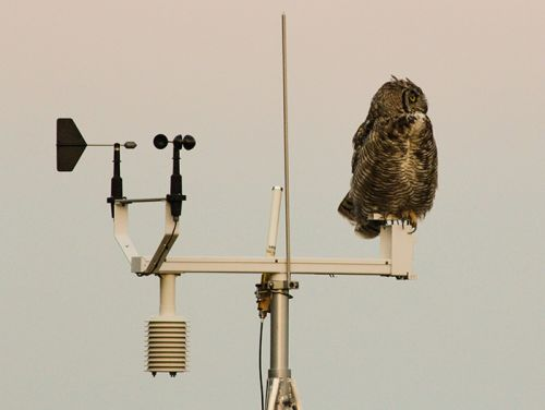 great horned owl on top of a weather station