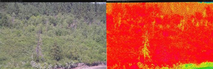 A standard image and NDVI image