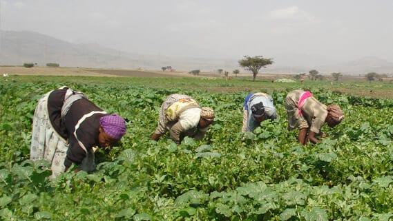 women working on their farm
