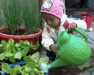 Young Bolivian girl waters lettuce with a green watering can