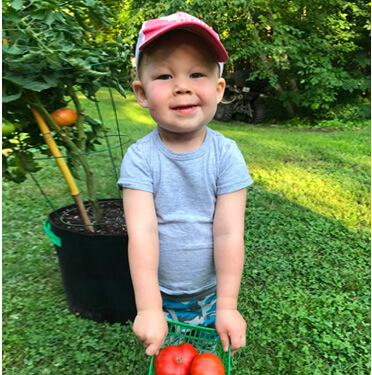 Little boy holds a small basket of tomatoes