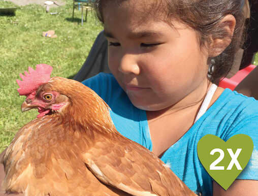 A Bolivian girl holds a chicken