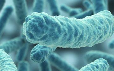 Närbild på bakterie