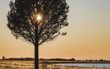 Träd som skymmer solen