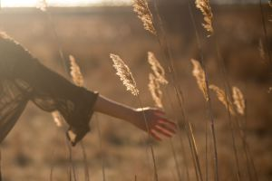 Oustretched hand in wheat field
