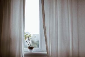 Plant by window
