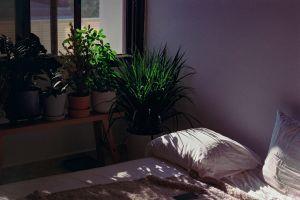 Bed in dappled sunlight