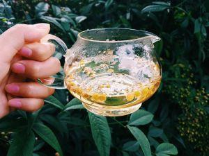 cup chamomile tea