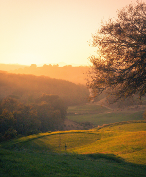golfers green at sunset