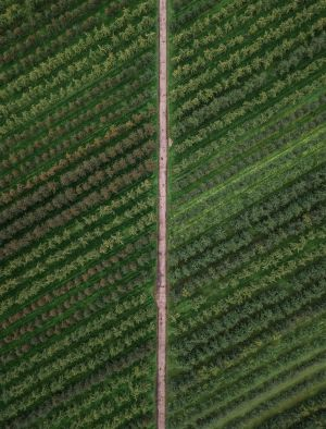 CBD farm aerial view