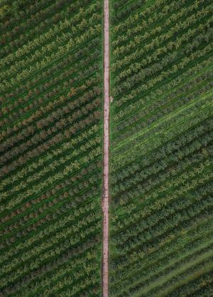 Cannaray hemp farm for CBD