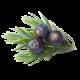 Juniper Berry Flavour