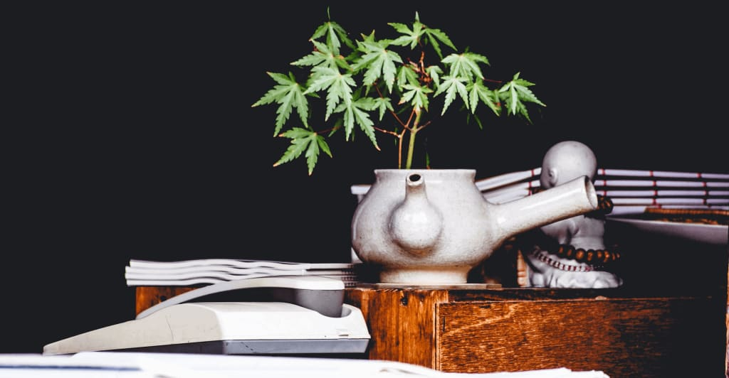 Using the Whole Plant - What is the Entourage Effect image