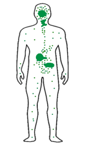 Simulation of the Endocannabinoid system