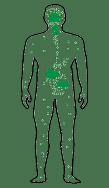 Endocannabinoid system image 1