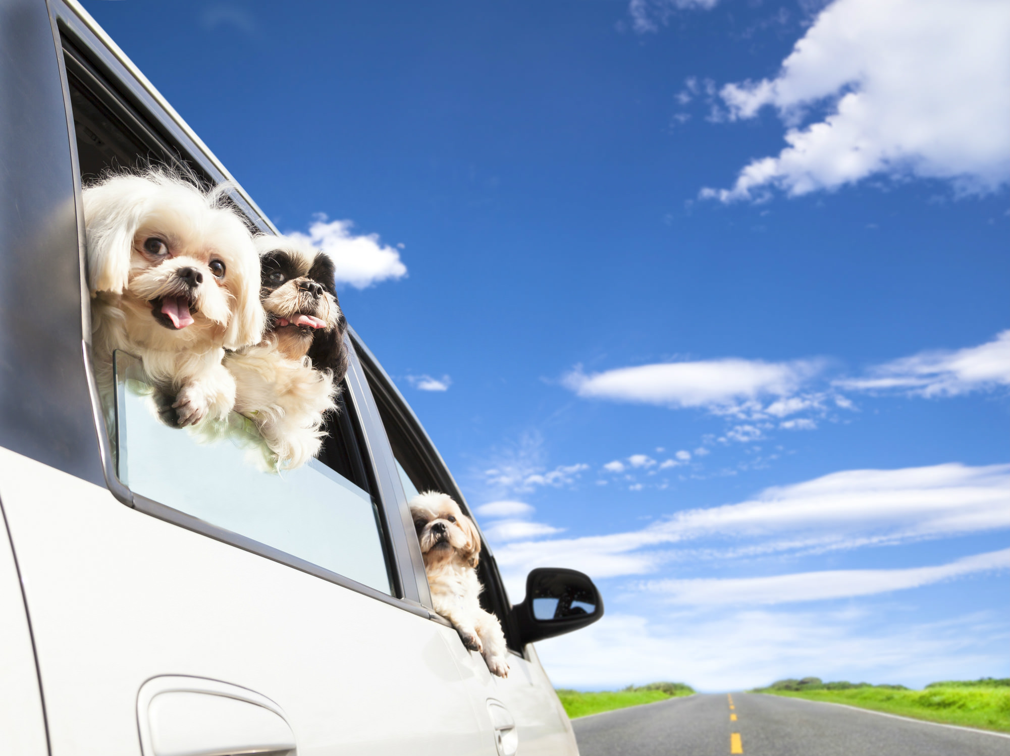 blog/224/Dont let dogs hang their head out of the window