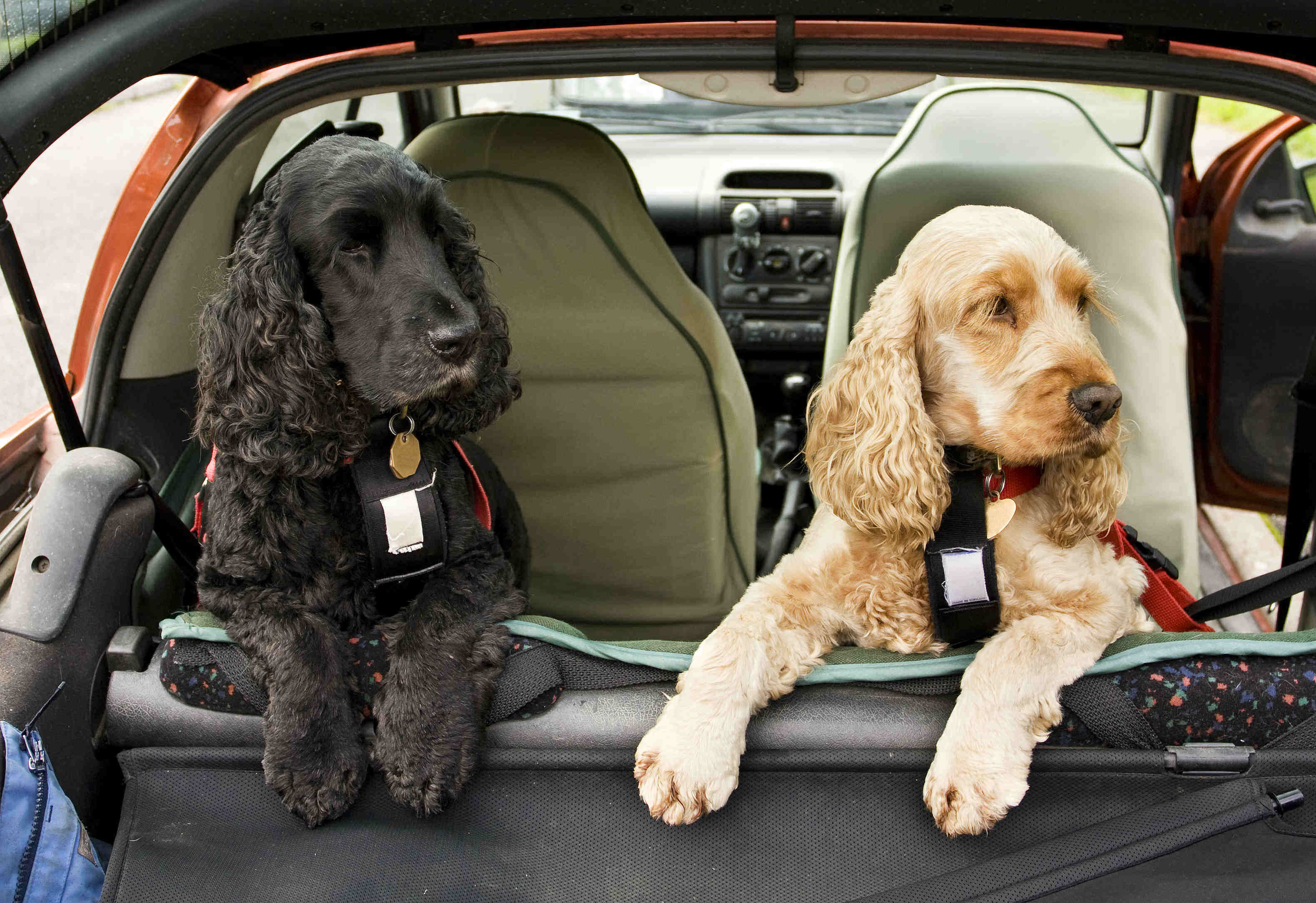 blog/224/What is a suitable restraint for an animal in a car