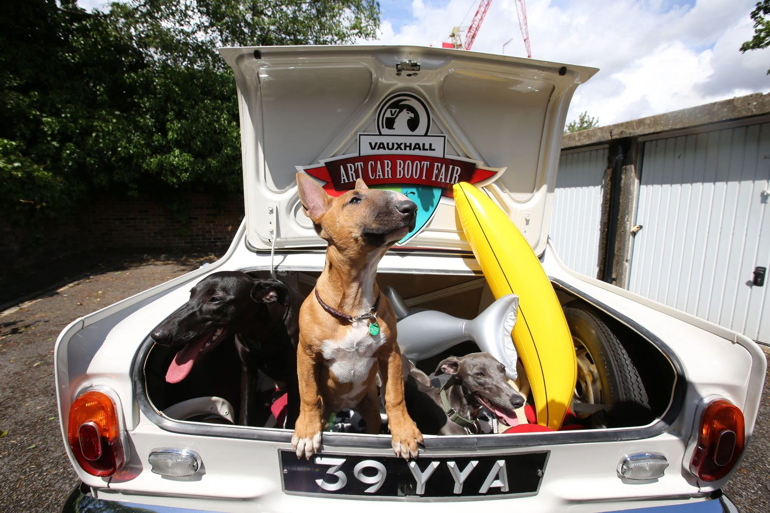 image of dogs in a car boot