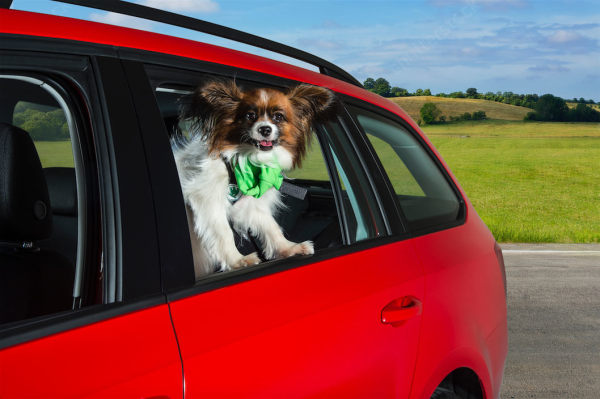 Used Car Buying Guide: the best £6000 cars for dog owners