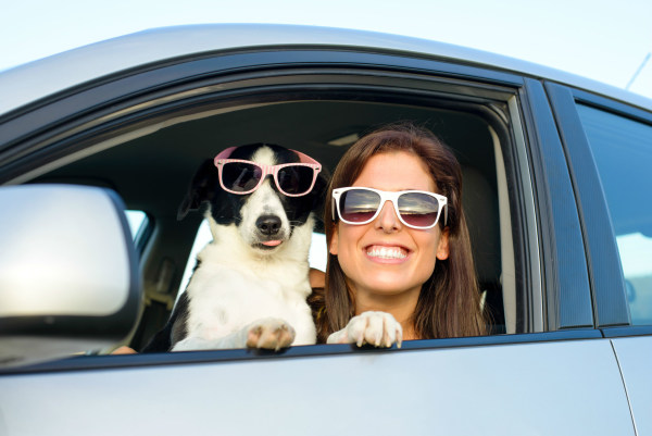 Wild thing: driving safely with pets in a car