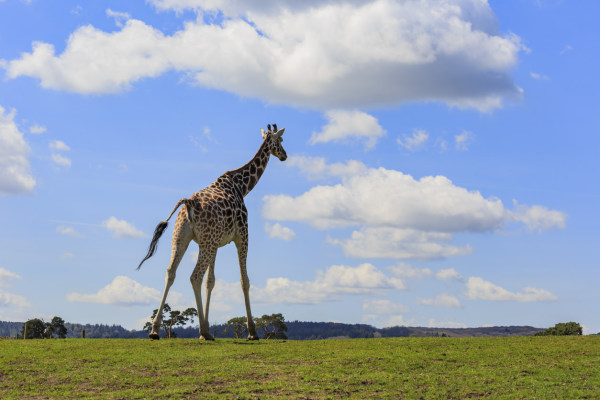 The best drive-through safari parks and zoos