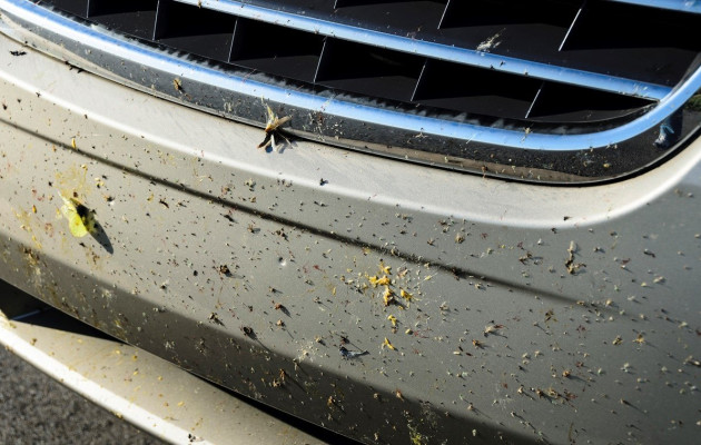 How to remove bugs and insects from car paintwork