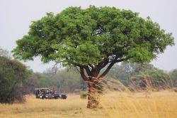 African Safari Car Hire