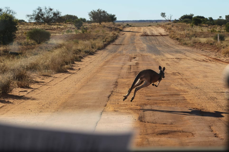 A close encounter or seven with thick-headed kangaroos did highlight the lack of a bullbar on our car.