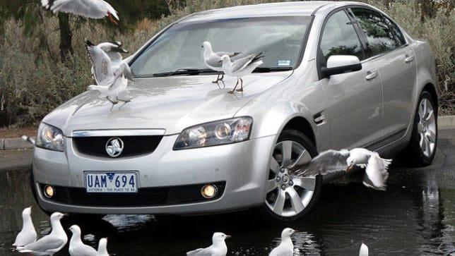 Hyundai Santa Fe Limited >> Bird droppings don't corrode paint - Car News | CarsGuide