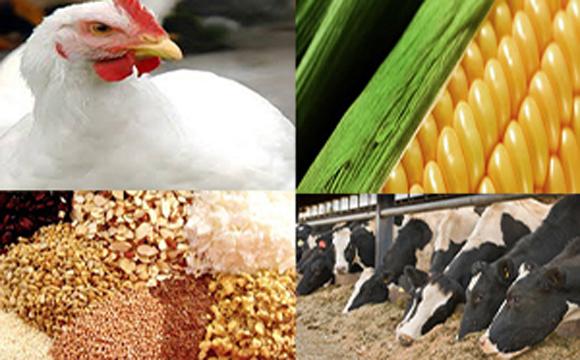 نهاده دامی-کشاورزی