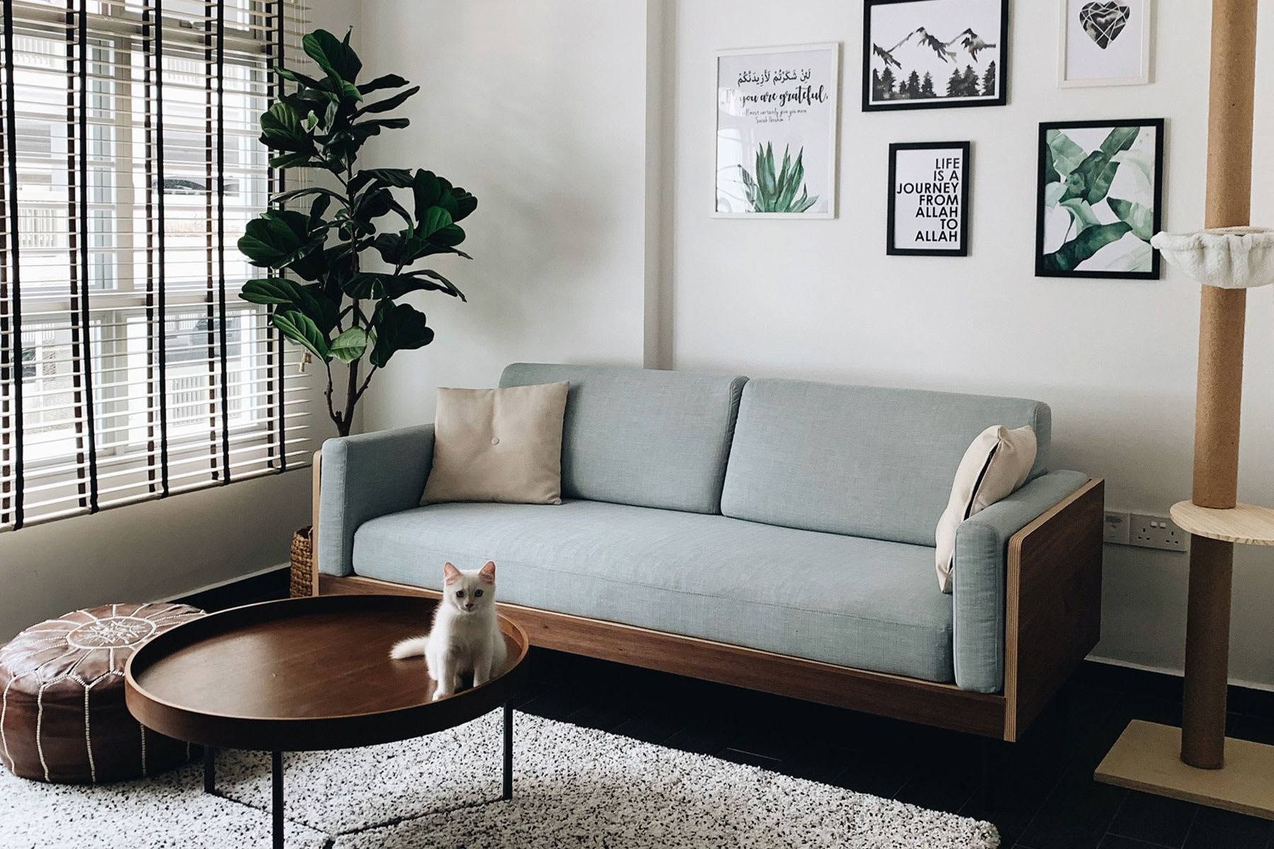 3 seater sofa in living room with cat post, coffee table, plant and rug