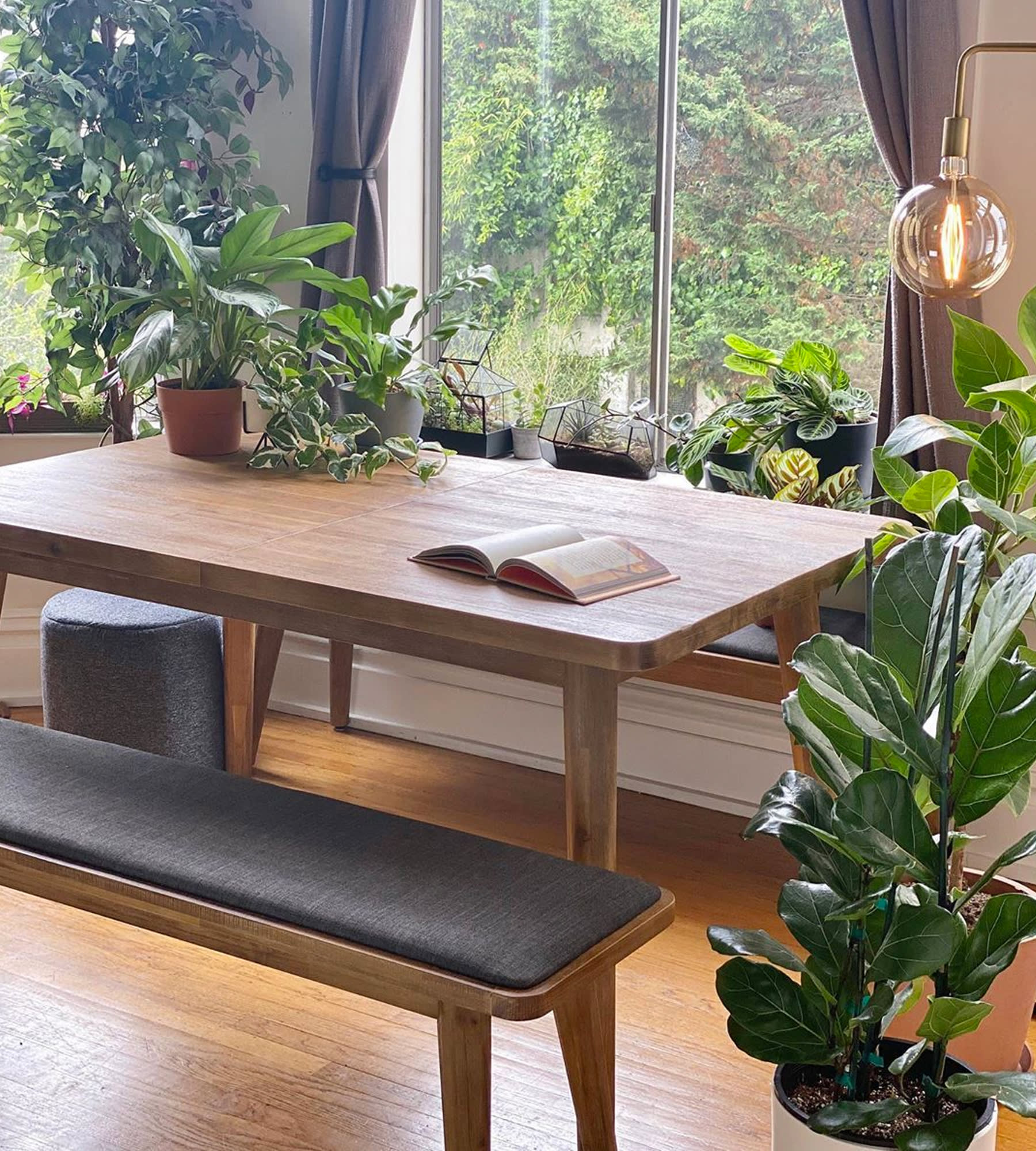 windowside wooden dining table, dining bench surrounded by potted plants