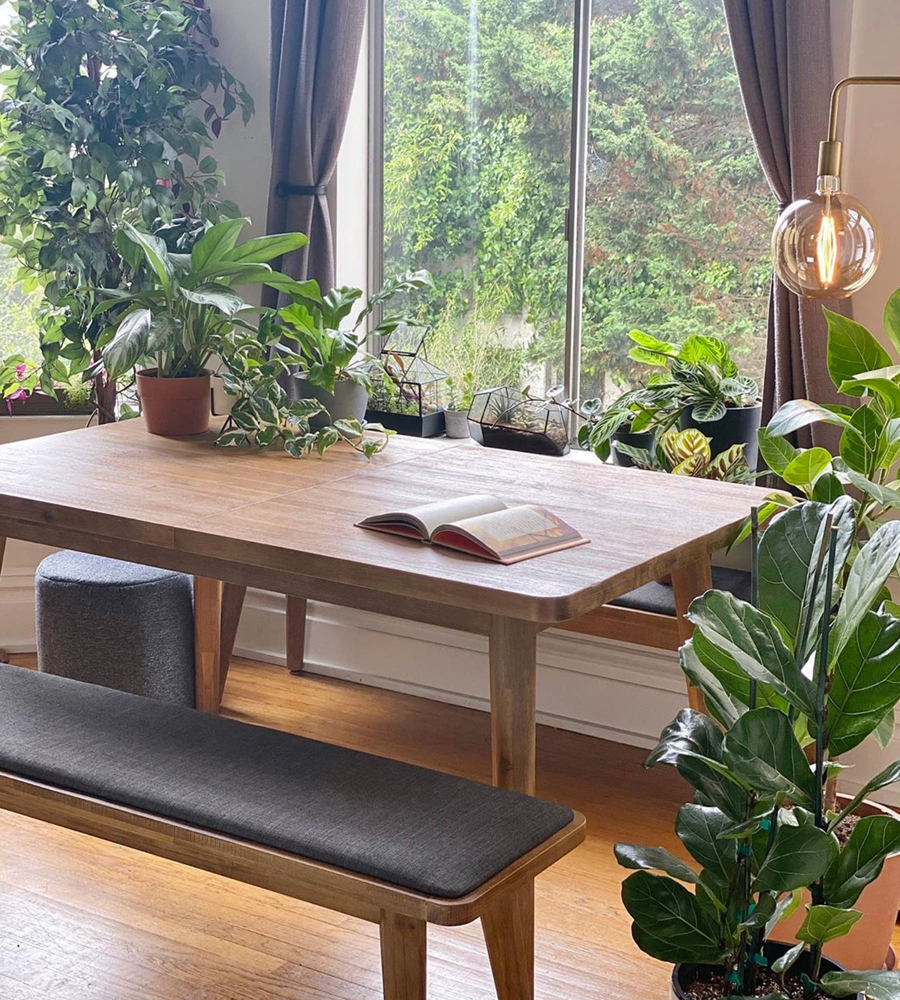 wooden dining table and bench set in dining area with plants
