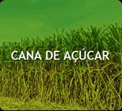 Custos de produção - Cana de Açúcar