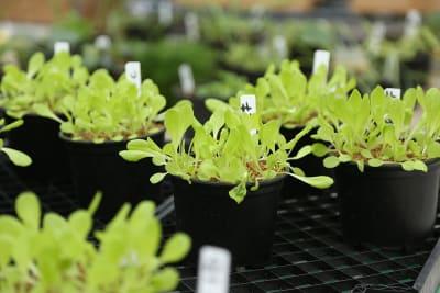 test-plantjes-op-rij-potgrond