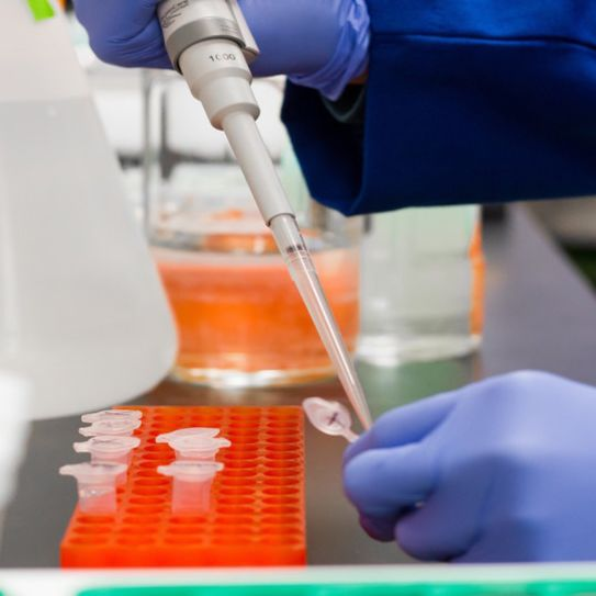 Gloved hands in a lab transfer liquid into a test tube