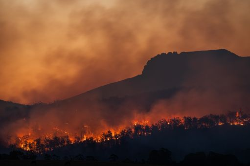 A wild rages in Tasmania, one of dozens of major fires to break out around the world in the last year