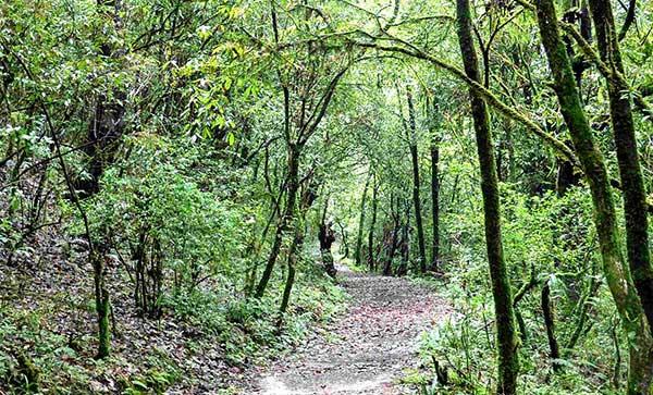 Chisapani Nagarkot Trekking