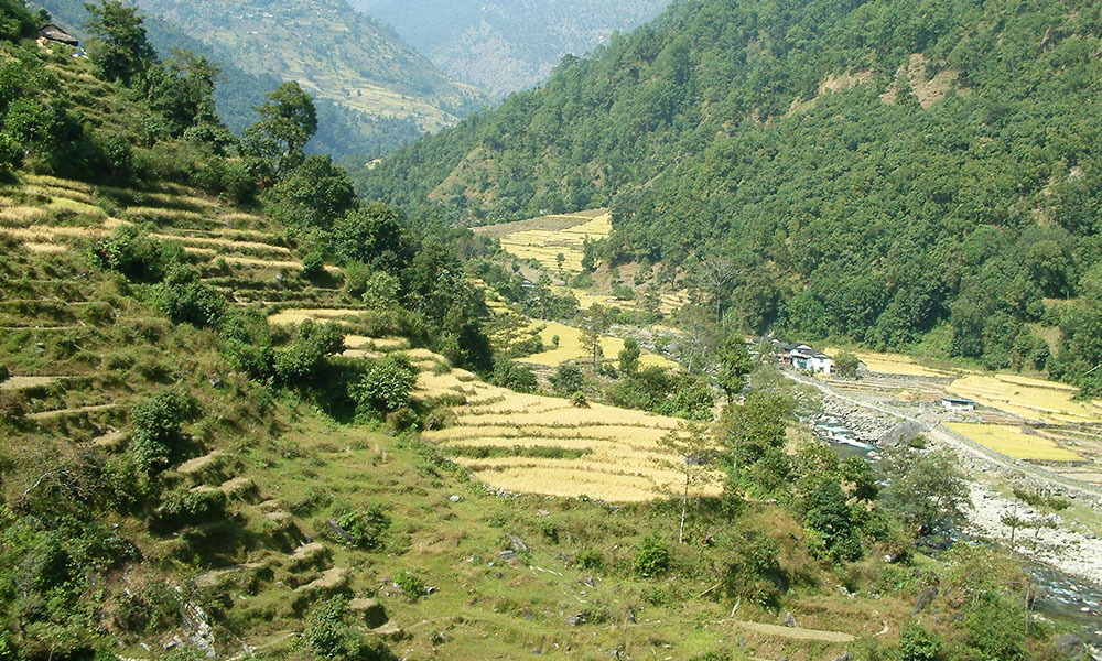 Rice fields on the way to Sudhame