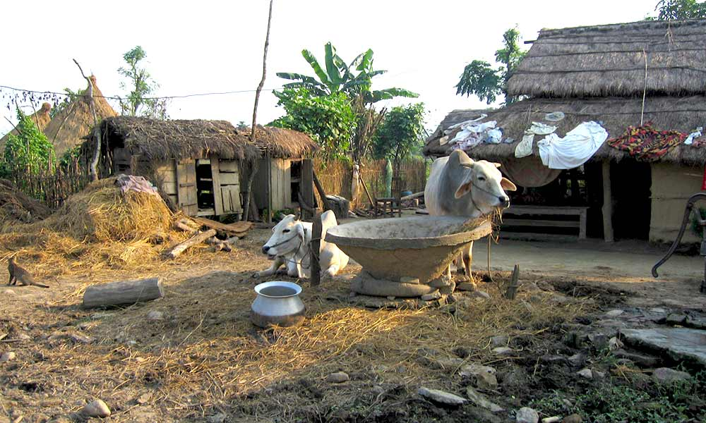A glimpse of Tharu Lifestyle