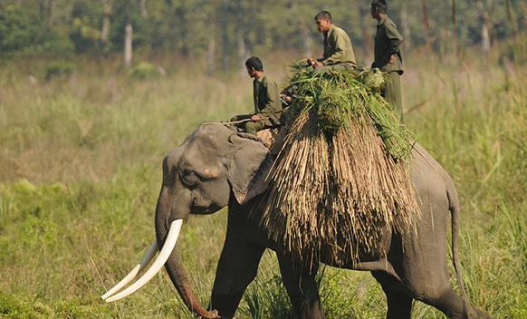 Ghorepani Poon Hill Trek with Chitwan Tour