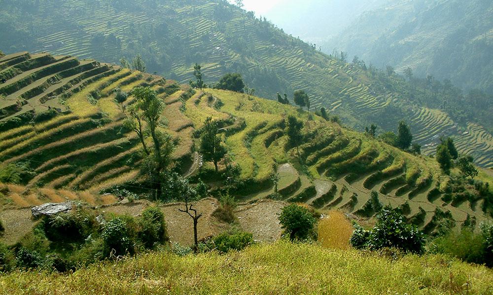 View of terraced fields from Landruk