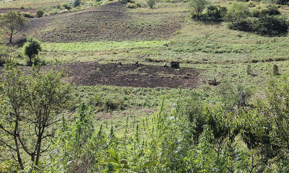 Farmers Ploughing Field