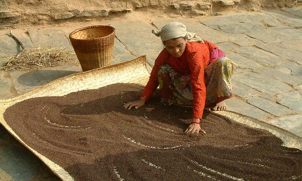 A local woman sifting Kodo millet