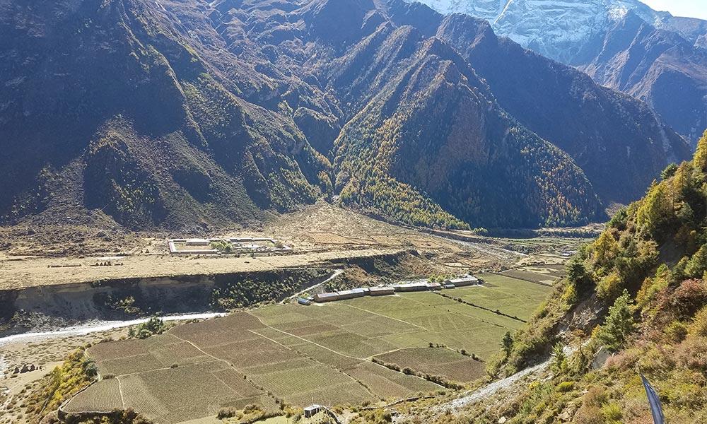 Farmlands at Rachen Gompa
