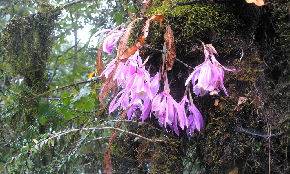 Sunkesari Flower